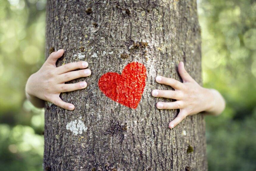 Viajar con los 5 sentidos. Abrazo un recuerdo, abrazo un árbol.